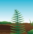 ferns moss soil vector image vector image