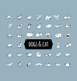 cute dogs collection for your design vector image vector image
