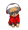 cute pomeranian toy dog dressed in red hoodie vector image vector image