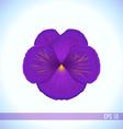 head of violet viola flower vector image