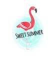 sweet summer pink flamingo bird poster design vector image