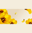 yellow tulips and petals on transparent background vector image