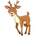a cute deer on white background vector image