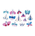 collection of moths of different types and sizes vector image vector image