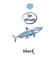 blue shark watercolor vector image vector image
