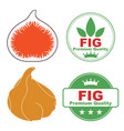 Fig vector image vector image