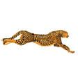 leopard jaguar hunting vector image