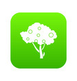 apples on apple tree branches icon digital green vector image
