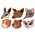 Different animal heads on white background vector image vector image
