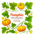 pumpkin elements set vector image
