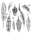 sketch of feathers vector image vector image