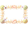tropical seashell frame clipart vector image