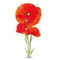 3d realistic red poppies flowers with steams