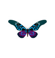 big collection colorful butterflies vector image