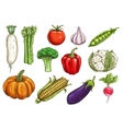 Fresh vegetable sketches for food theme design vector image vector image