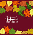 hello autumn background with fall leaves nature vector image
