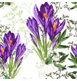 seamless floral violet crocus flowers and herbs vector image vector image