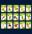 exotic vegetables farm market price cards vector image