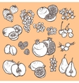 Fruits and berries sketch icons vector image vector image