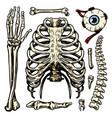 rib cage arm and eye and spine anatomy human