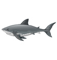 Wild shark on white background vector image