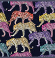 multicolor leopard pattern seamless dark blue vector image