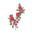 arctic lingonberries and leaves isolated on white vector image vector image