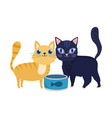 pet shop cute cats with fish can food animals vector image vector image