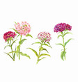 set watercolor carnations watercolor summer vector image vector image