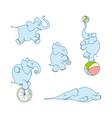 cute cartoon elephant set vector image vector image