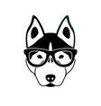 portrait of husky dog with glasses vector image vector image