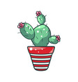 green home cactus in a pot natural houseplant vector image
