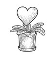 heart love grown as houseplant sketch vector image