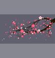 seasonal cherry tree with flowers vector image