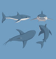 toothy swimming angry shark vector image vector image