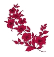 twig cherry blossoms vector image vector image