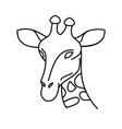 animal giraffe icon design clip art line icon vector image
