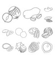 different kinds of nuts outline icons in set vector image