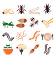edible worms and insects icons set vector image vector image
