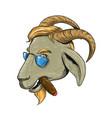 hip goat smoking cigar drawing vector image
