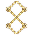 vertical straped ropes with golden metal eyelets vector image vector image