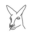 animal kangaroo icon design clip art line icon vector image vector image