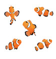 clown anemonefish vector image vector image