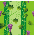grape background vector image