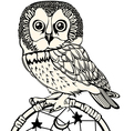 Owl in boho style vector image vector image