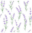 seamless pattern of lavender flower vector image vector image