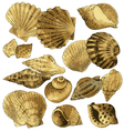 Seashell collection vector image