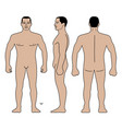 fashion man body full length bald template figure vector image vector image
