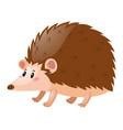 little hedgehog on white background vector image