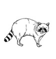 raccoon icon outline vector image